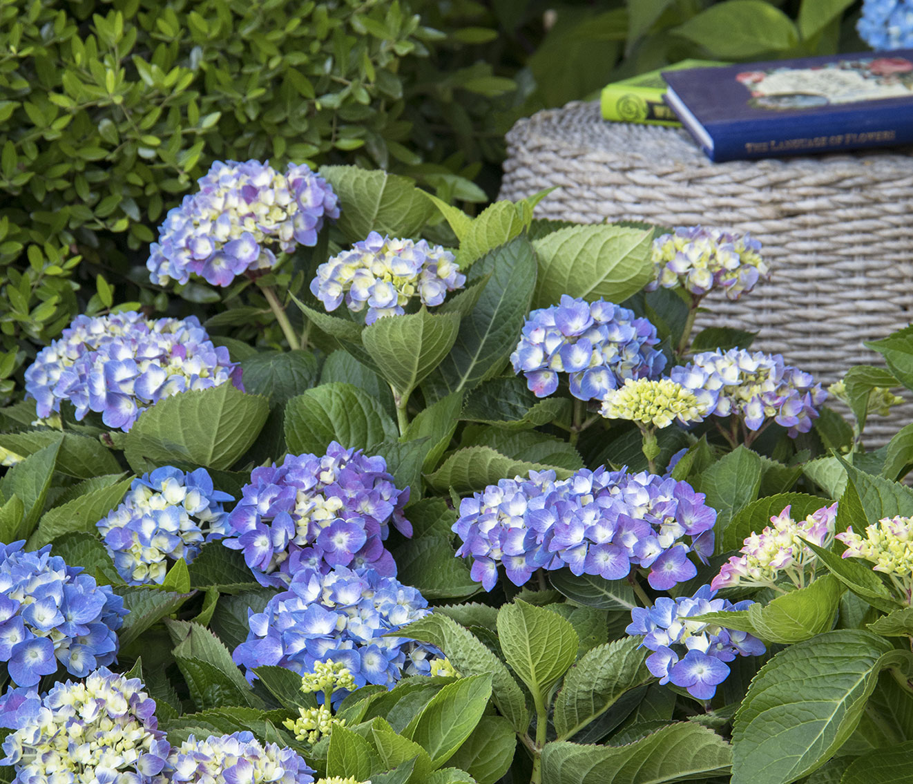 GardenSMART Article Image